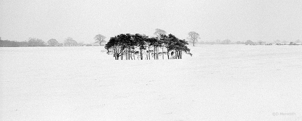 trees in snow, Hatherton, Cheshire, England.