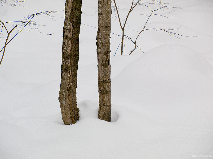 two tree trunks in snow
