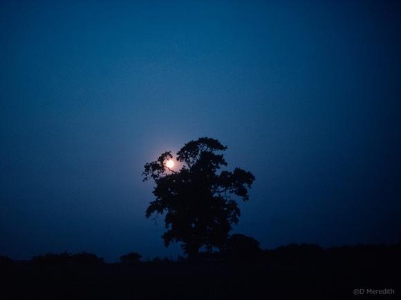 Moonrise over farmland, Cheshire, England.