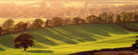Trees and their shadows on farmland.