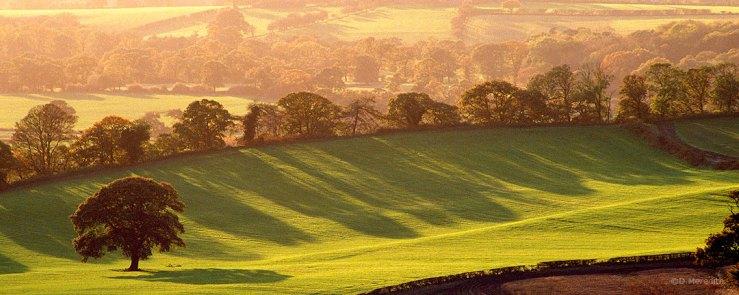 Trees and their shadows on farmland.