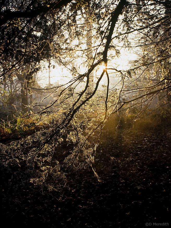 Backlit branch in winter