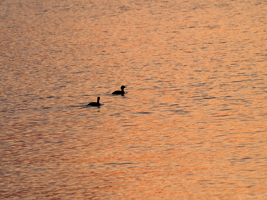 Two birds at sunrise.