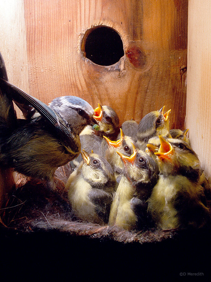 A cramped nestbox.