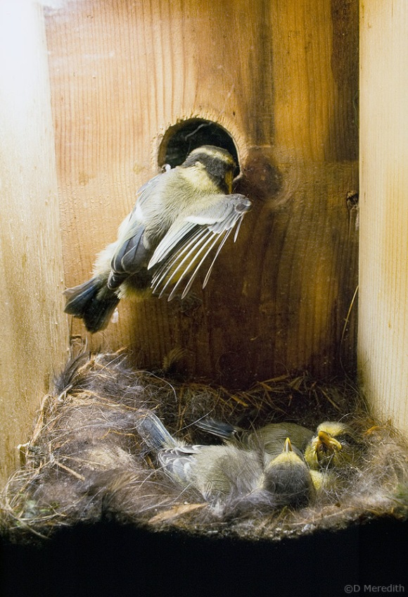 Number nine leaves the nestbox.