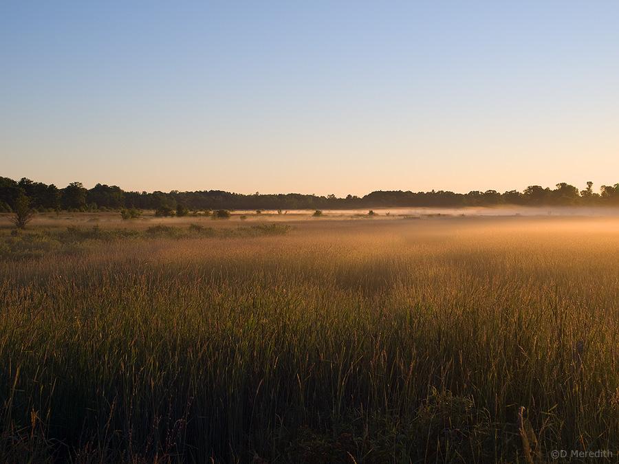 Vegetation and mist at sunrise.