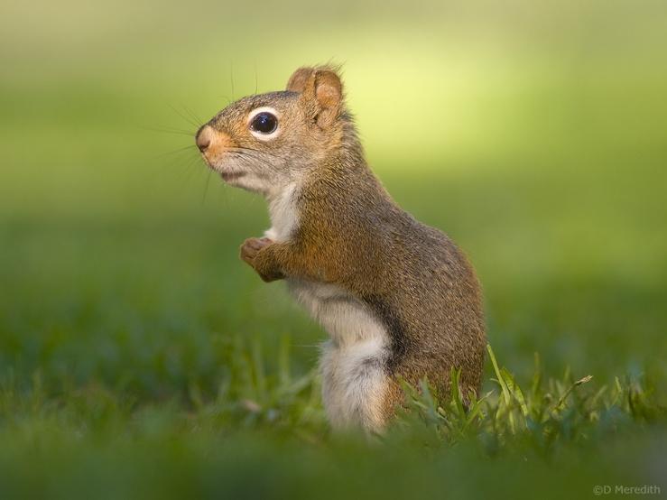 Sunlit Squirrel.