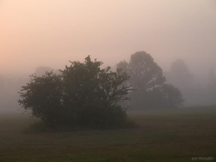 Trees in a fog shrouded hay field.