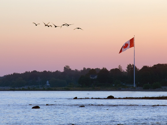 Canada Geese and a Canadian flag.