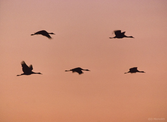 Formation flying at sunset.