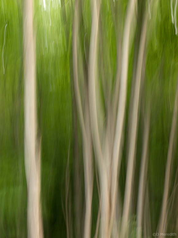 Abstract tree trunks.