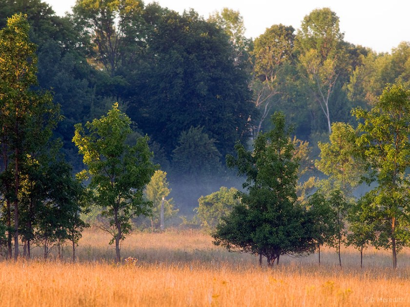Mist patches in trees at sunrise.