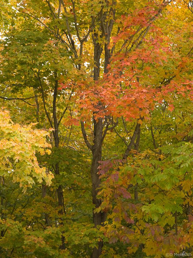 A patch of autumn colours.