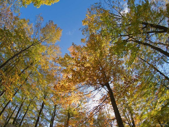 Golden leaves and blue sky.