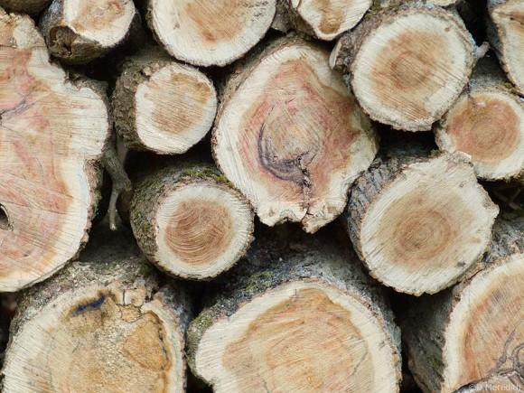 Circles of firewood.