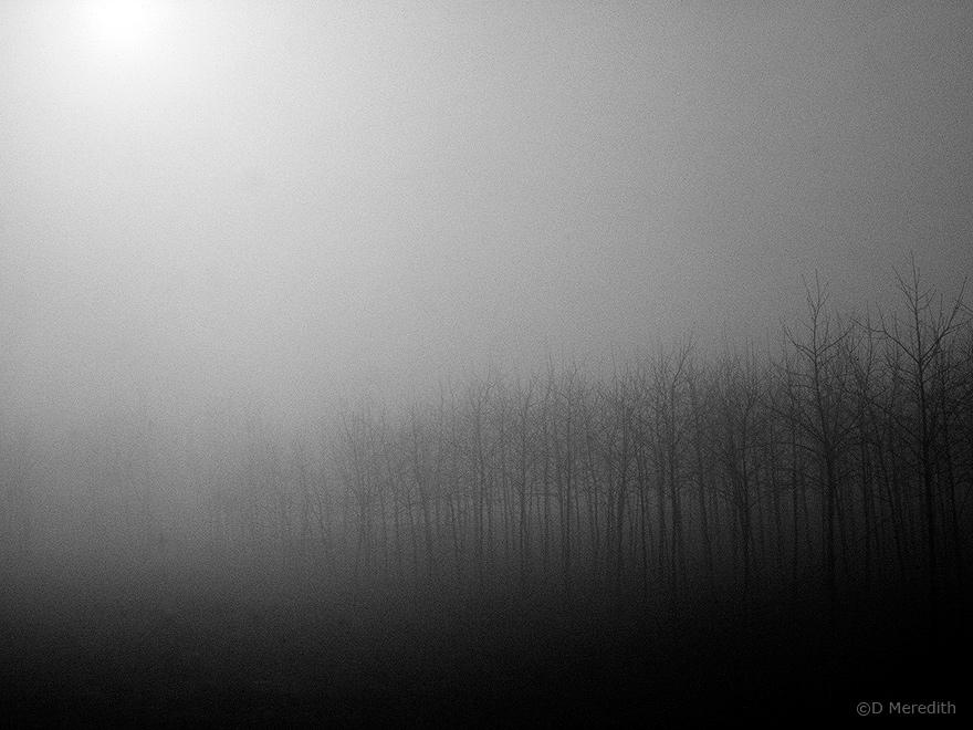 Foggy trees.