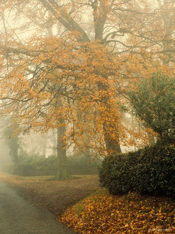 Autumn colour in mist.