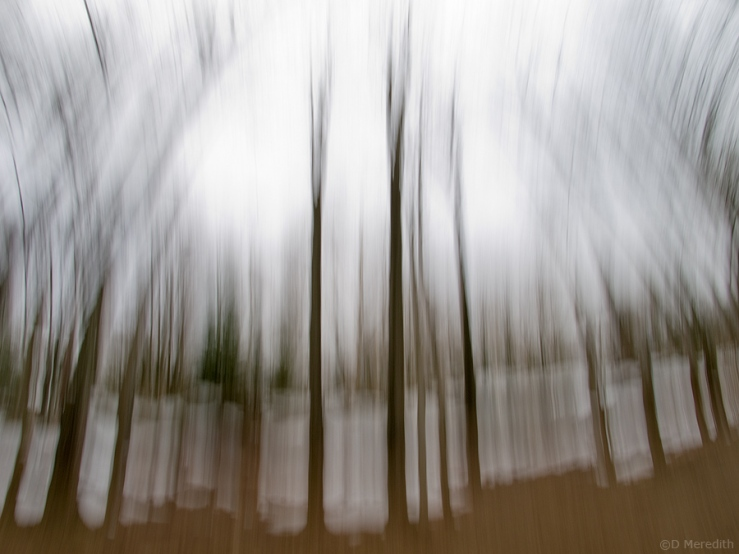 An impression of trees with a fisheye lens.