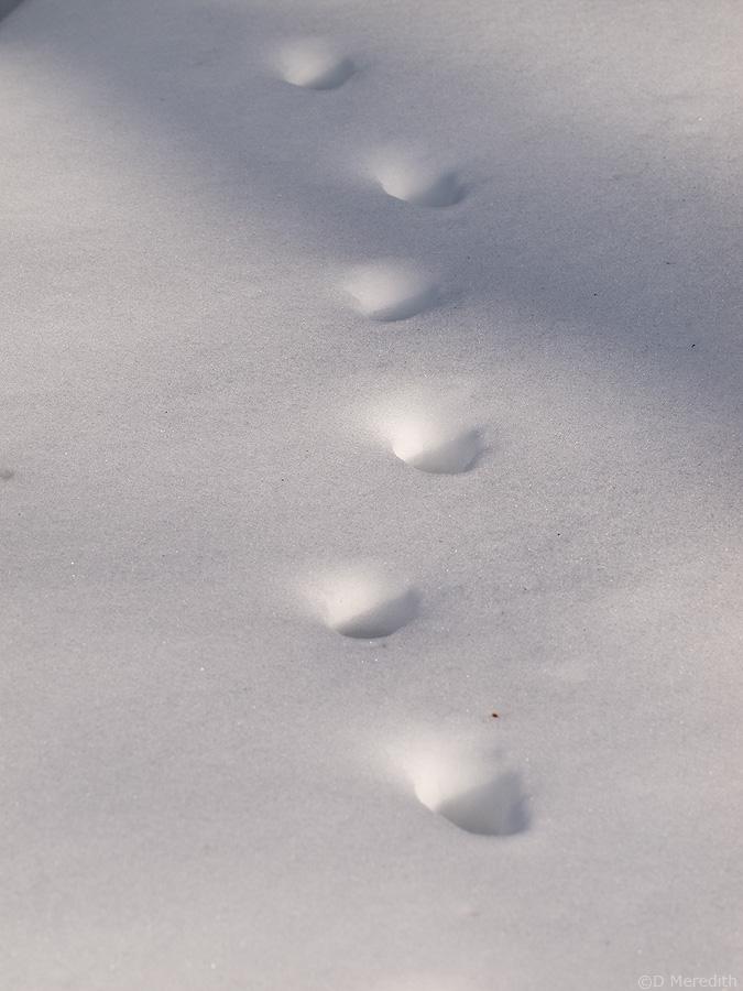 Animal tracks in snow.