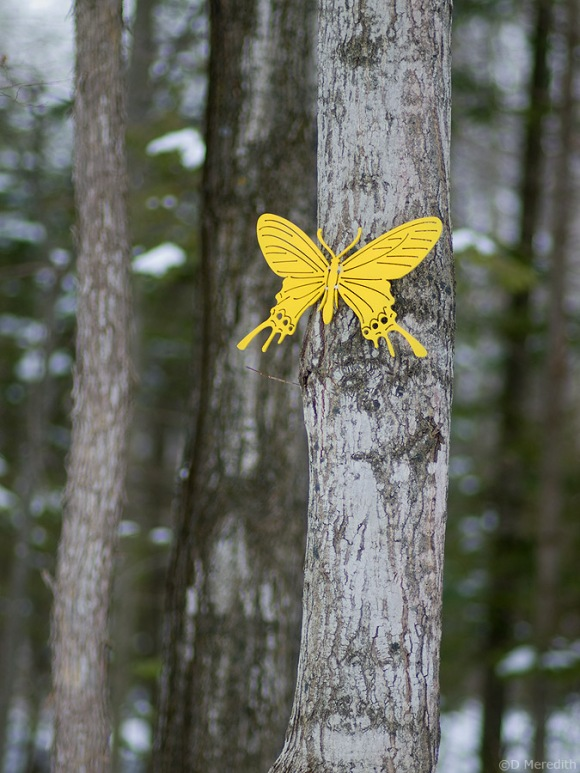 Large Yellow Butterfly in winter.