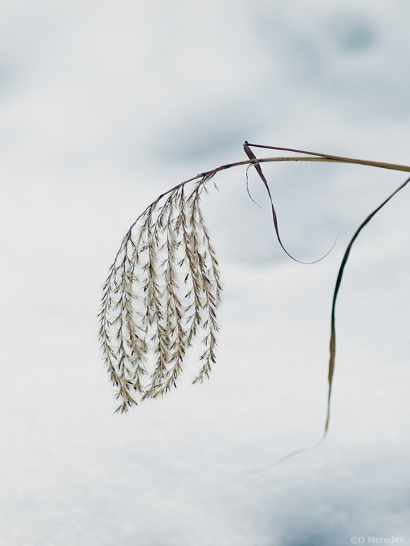 Simply a seed head.