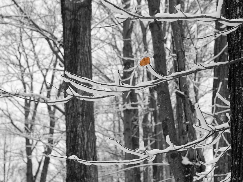 A leaf clings on.