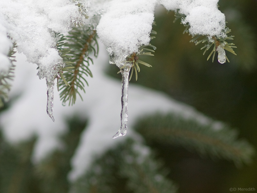 Icicles on the tips.