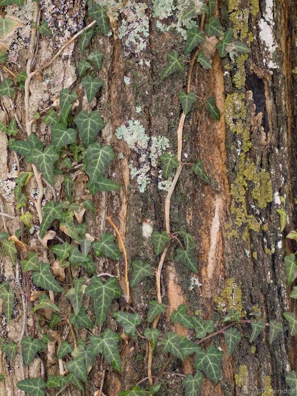Tree trunk detail in winter.