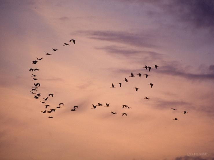 Living sky.