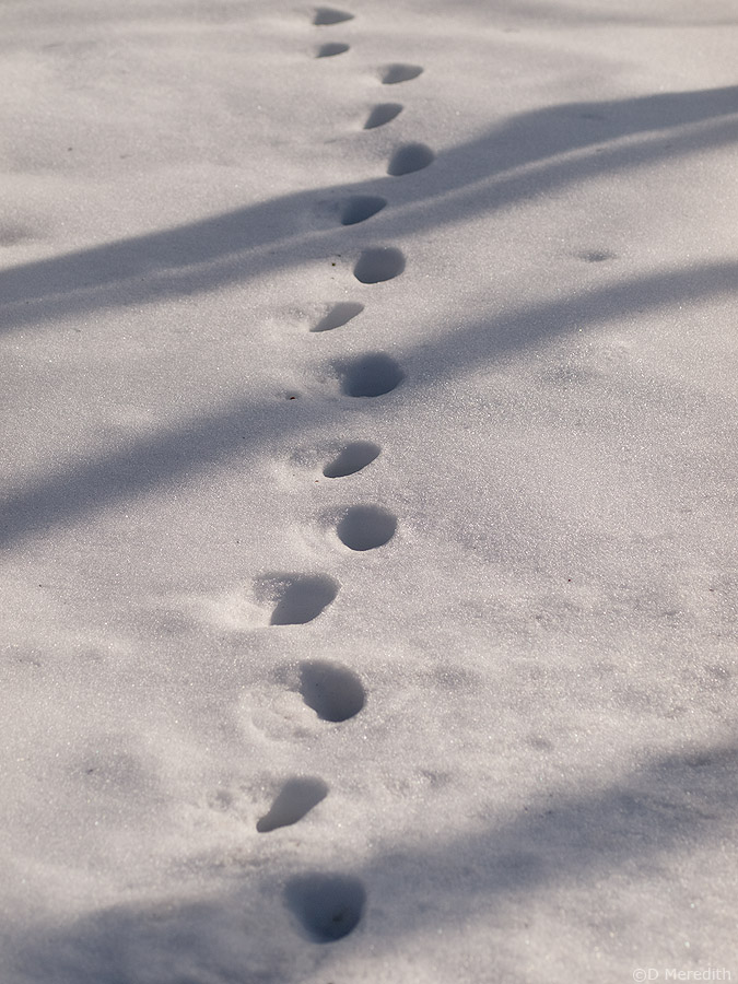 Tracks in the snow with shadows.