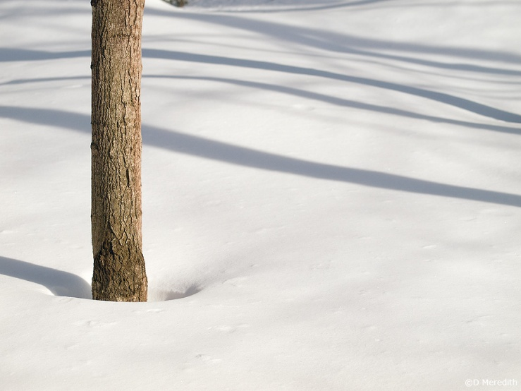 Shadows on the snow with a tree trunk.