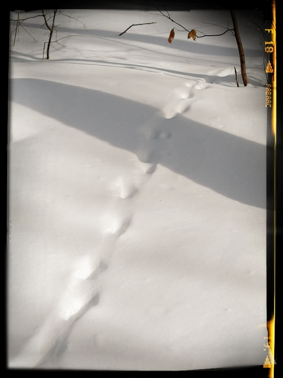 Tracks in the snow with a shadow.
