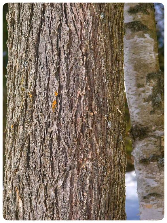 Orange Lichen on a tree trunk.