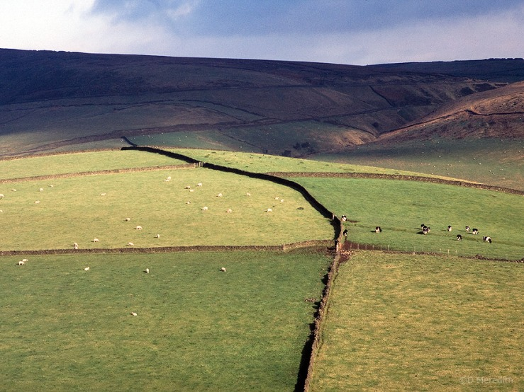 Peak District dry stone walls.