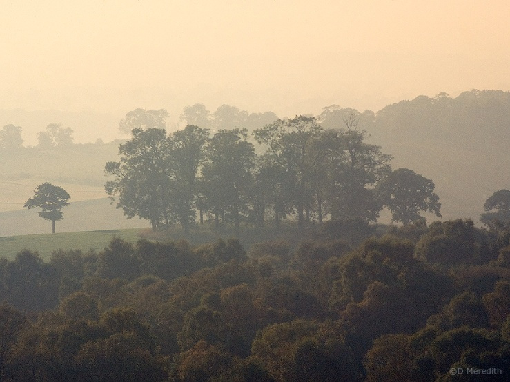 Trees in mist during the golden hour.