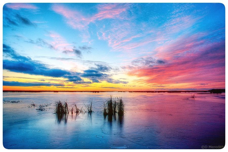 Frozen marsh at dusk.