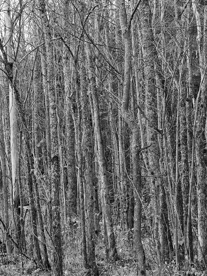 Tree trunk jungle.