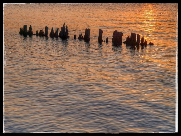 Wooden pilings sticking out of Colpoy's Bay.