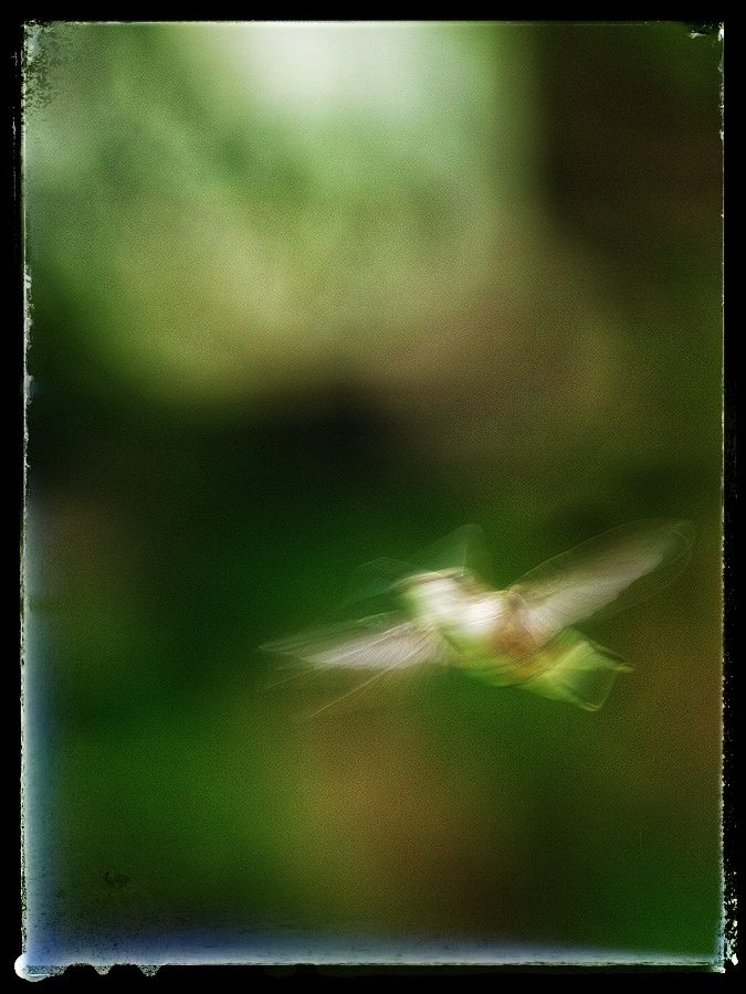 Motion blurred Hummingbird.