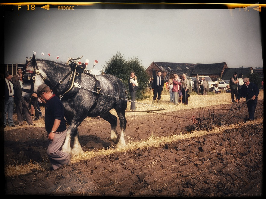 Ploughing with a horse.