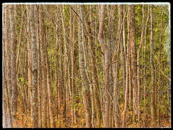 Autumn tree trunks.