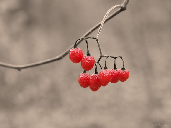 A group of red berries.