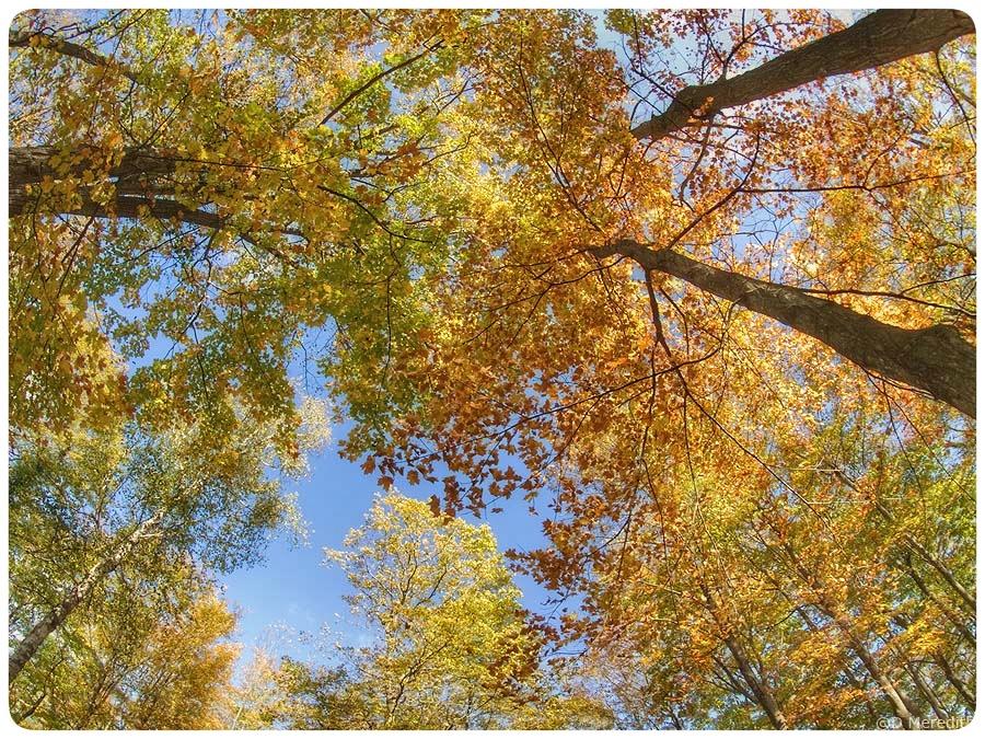 Fisheye autumn colour.