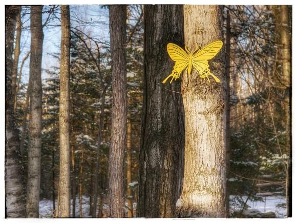 Yellow butterfly garden ornament.