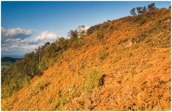 Bickerton Hill escarpment.