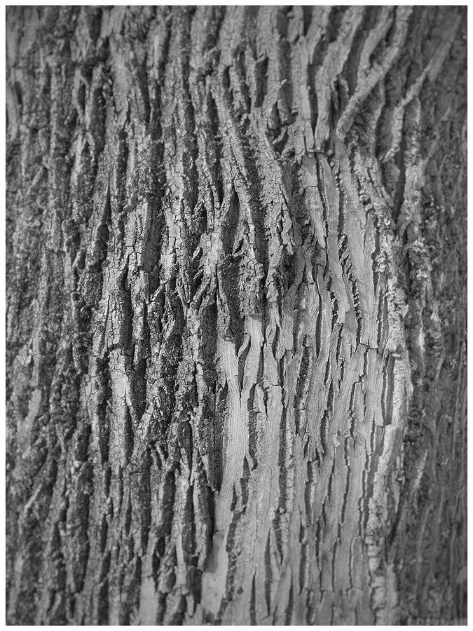 Monochrome tree bark.