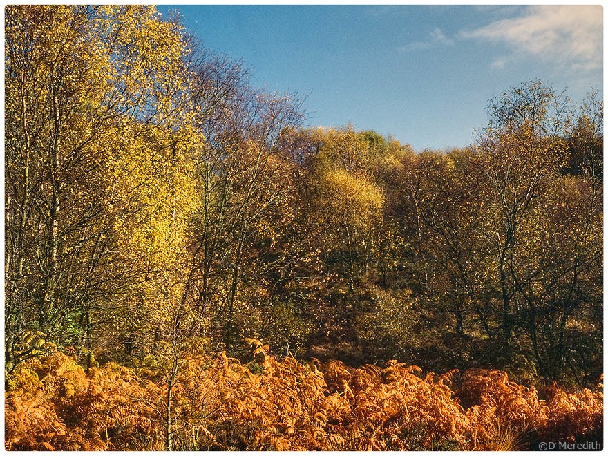 Autumn colour on Maiden Castle, Bickerton Hill.