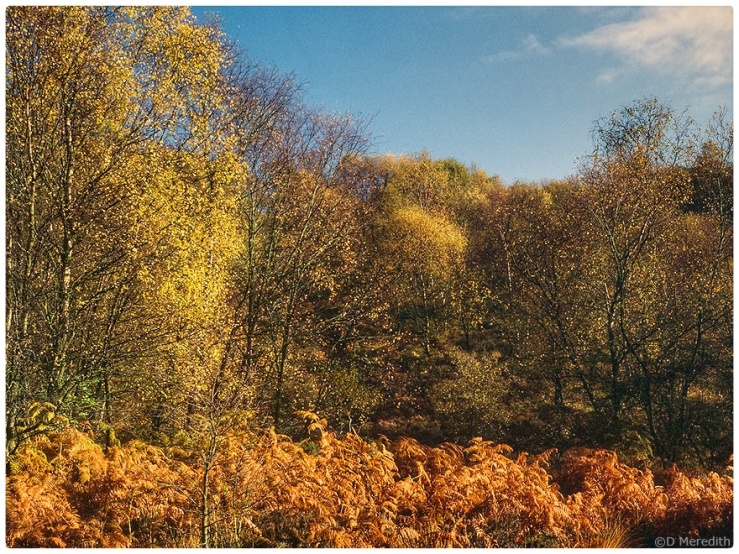 Autumn colour on Maiden Castle, Bickerton Hill.