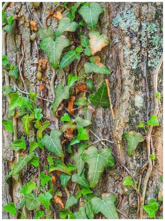 Tree trunk detail.