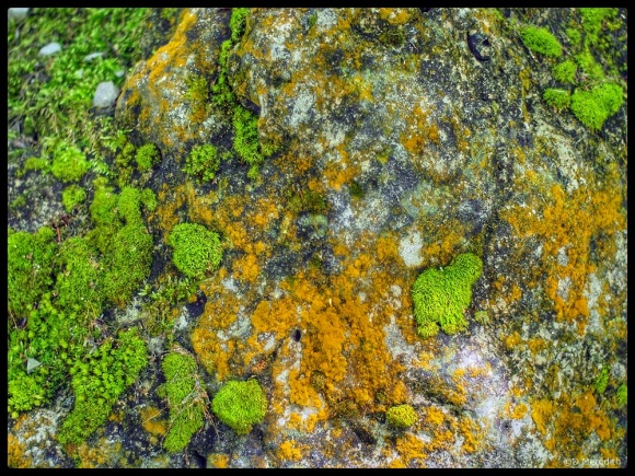 Green moss and orange Lichen.